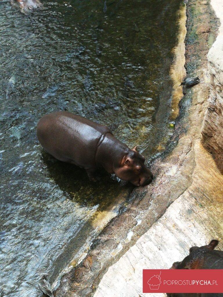 Wrocław - zoo afrykarium